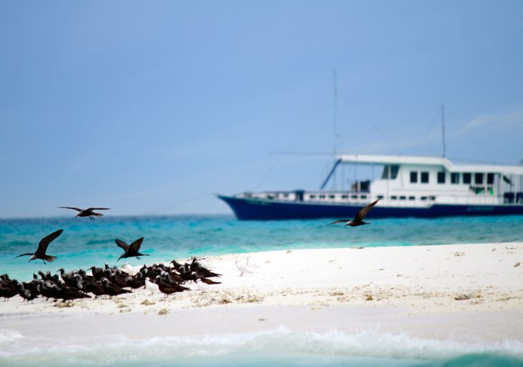 Gulfaam surf charter Maldives